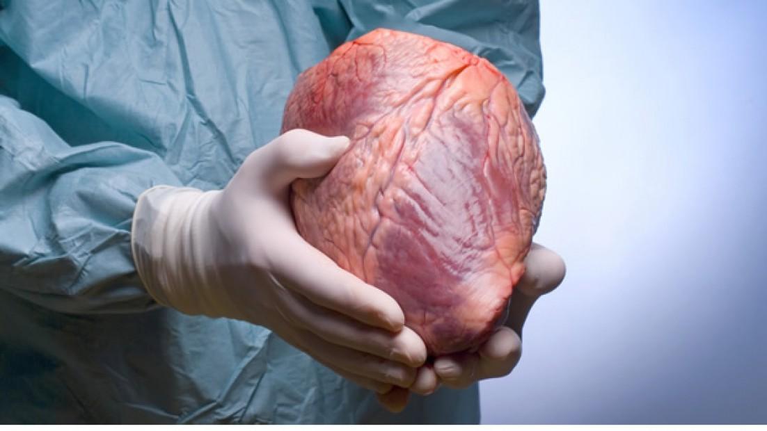 Llamada en Espera, la nueva campaña por la donación de órganos