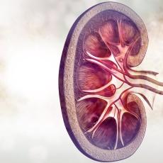 Investigadores brasileños descubren método que rehabilita riñones para trasplante